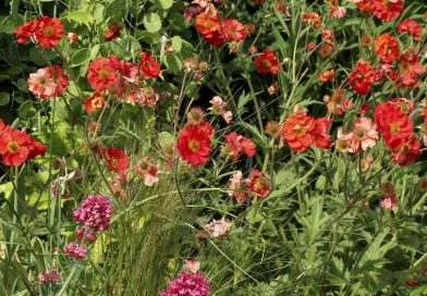 Gt Wilbraham Open Gardens