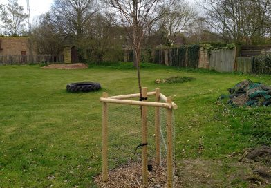 Tree Planting in Great Wilbraham Play Area