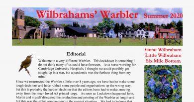 WILBRAHAMS' WARBLER  SUMMER 2020 ON LINE