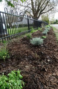 The newly planted border by the playground