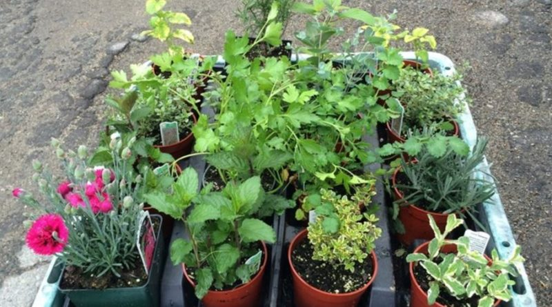 Picture of plants for sale